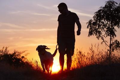 夕日の中の飼い主と犬