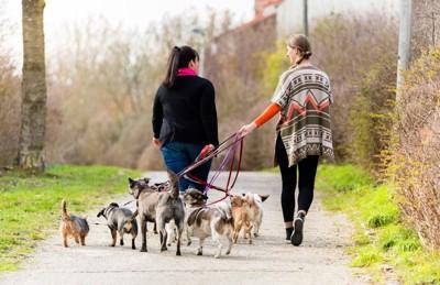 数匹の犬の散歩をする二人の女性
