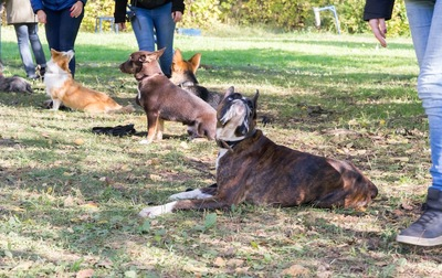 野外での犬と飼い主のグループレッスンの様子