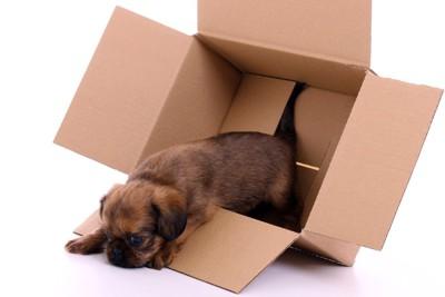 箱から出ようとした際につまづいてしまった犬