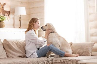 飼い主さんと向き合って座る犬