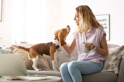 カップを片手に犬と触れ合う女性