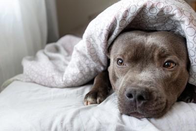 飼い主に引っ付く犬