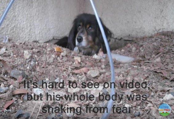 穴かから顔を出した犬