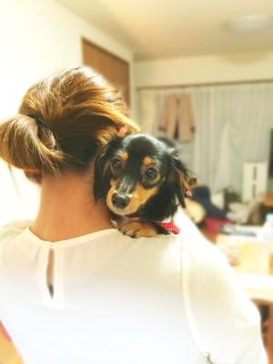 女性に抱かせる犬 ダックス