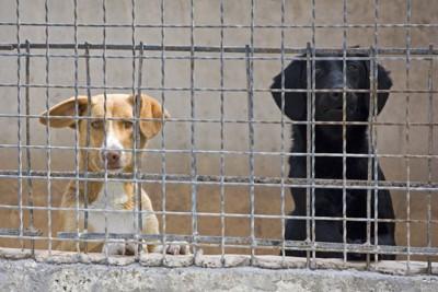 保護施設の犬たち