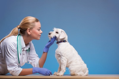 女性獣医師と白い犬