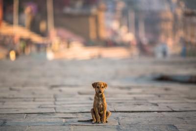 一人ぼっちで道に座っている子犬