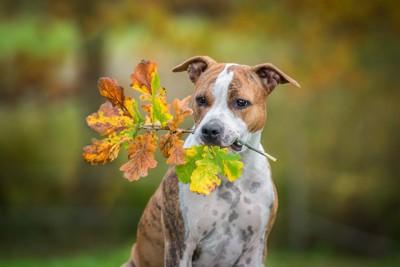 枝を咥える犬