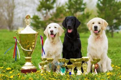 トロフィーの隣に座る3匹の犬