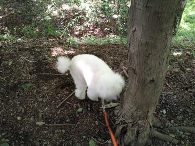犬にノミがつきやすい場所