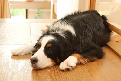 どこか悲しげに座っている犬