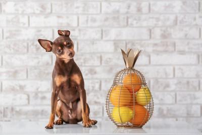 犬とオレンジ