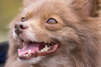 小型犬の笑顔