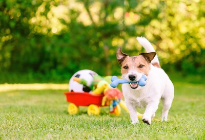 おもちゃの骨を咥えて走る犬
