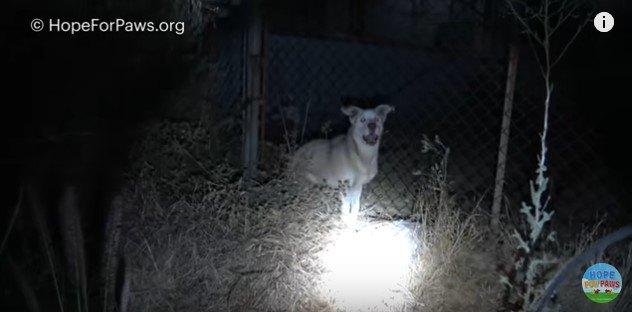 フェンスを背に立つ犬