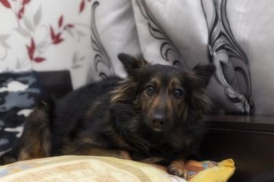 部屋の隅に隠れて怯える犬