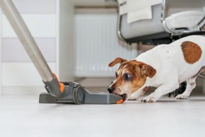掃除機を噛む犬