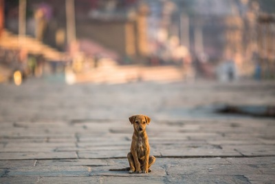 道に座る犬