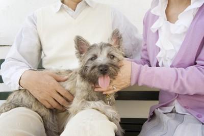 夫婦の男性の膝の上にいる犬