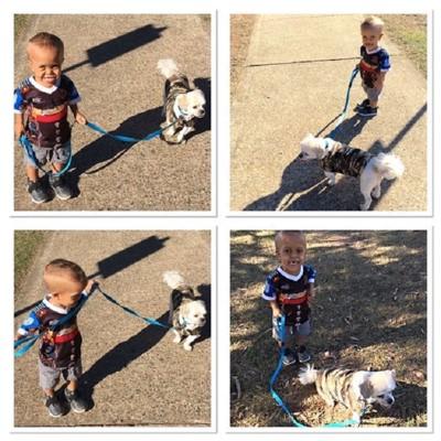 子供と犬の散歩風景4分割