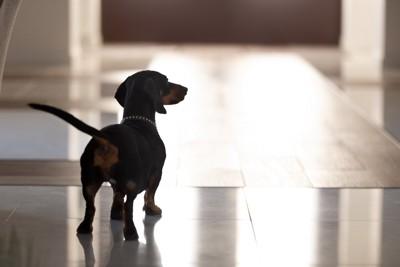 飼い主を探す犬