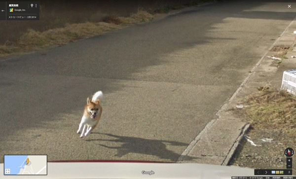ストリートビューカーを追いかける柴犬のコーナーリング