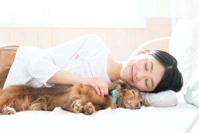 ベッドで飼い主の横で寝る犬