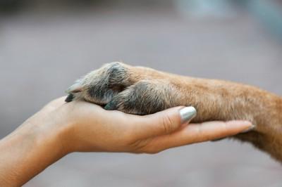 女性の手に乗せたシニア犬の前足