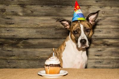 カップケーキを横目で見ている犬