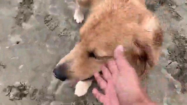 犬の顔を撫でる手