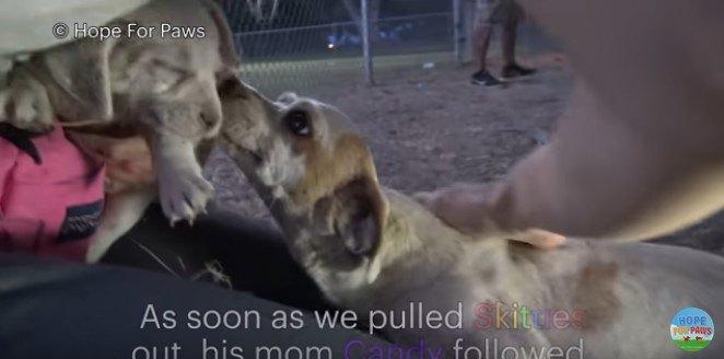 子犬を追って出てきた母犬