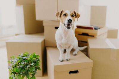 箱の上に座る犬