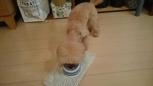 茹で汁の混ざった水を飲んでいる愛犬