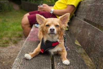 飼い主の座るベンチで目を細めている犬