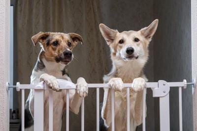 2匹で並ぶ犬
