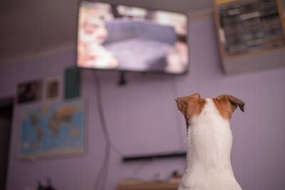 テレビと犬の後ろ姿