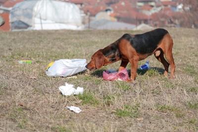 ごみを漁る犬