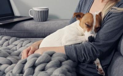 女性に抱かれて眠る犬