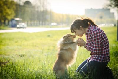 芝生の上で顔を寄せ合うシェルティーと女性