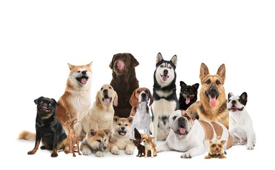 いろんな犬種の集合