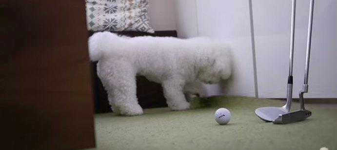 ボールをとるわんこ