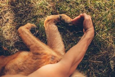 犬と人の手で作ったハート形