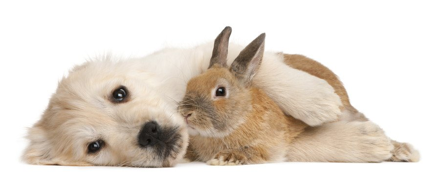 ウサギを抱いて横になる犬