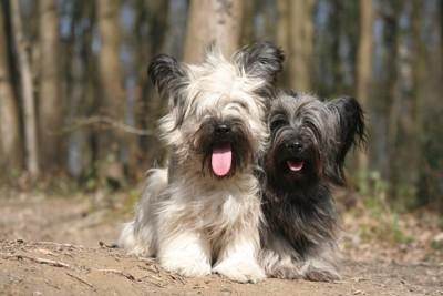 並んでいる犬2匹