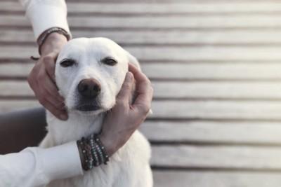 人に触られている犬