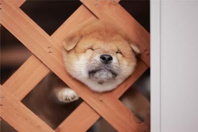 柵から頭を出す子犬