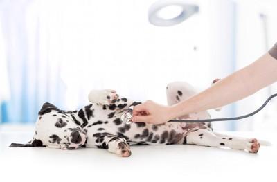 動物病院で嫌がる犬
