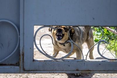 門の向こうで吠える犬