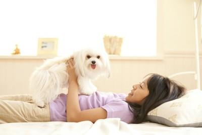 犬をお腹の上に乗せて遊ぶ少女